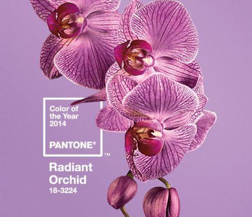 radiant orquid
